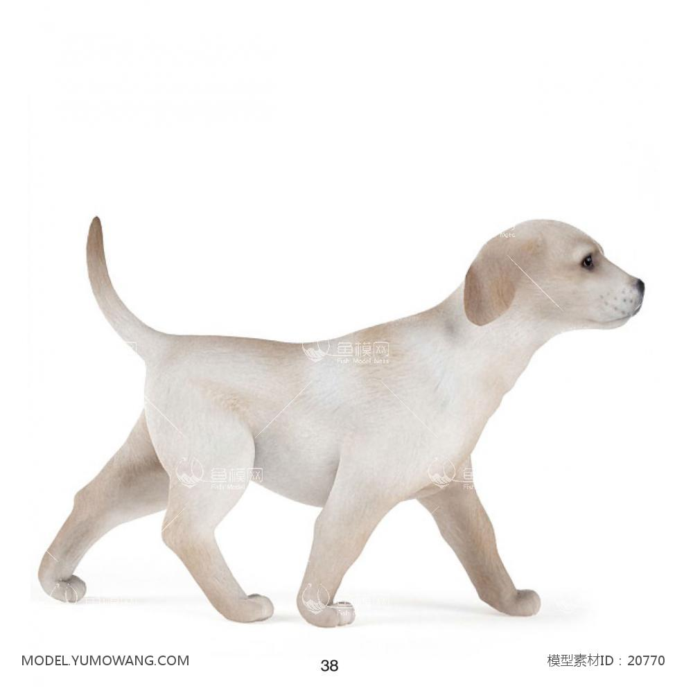 动物-狗-拉布拉多-行走3d模型免费下载