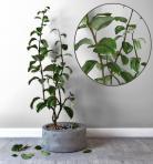 现代绿植盆栽 (2)3D模型下载-[ID]43400