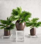 现代植物类盆栽193D模型下载-[ID]43427