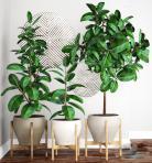 现代植物类盆栽43D模型下载-[ID]43434