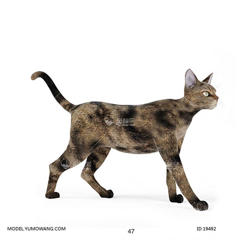 猫3d模型