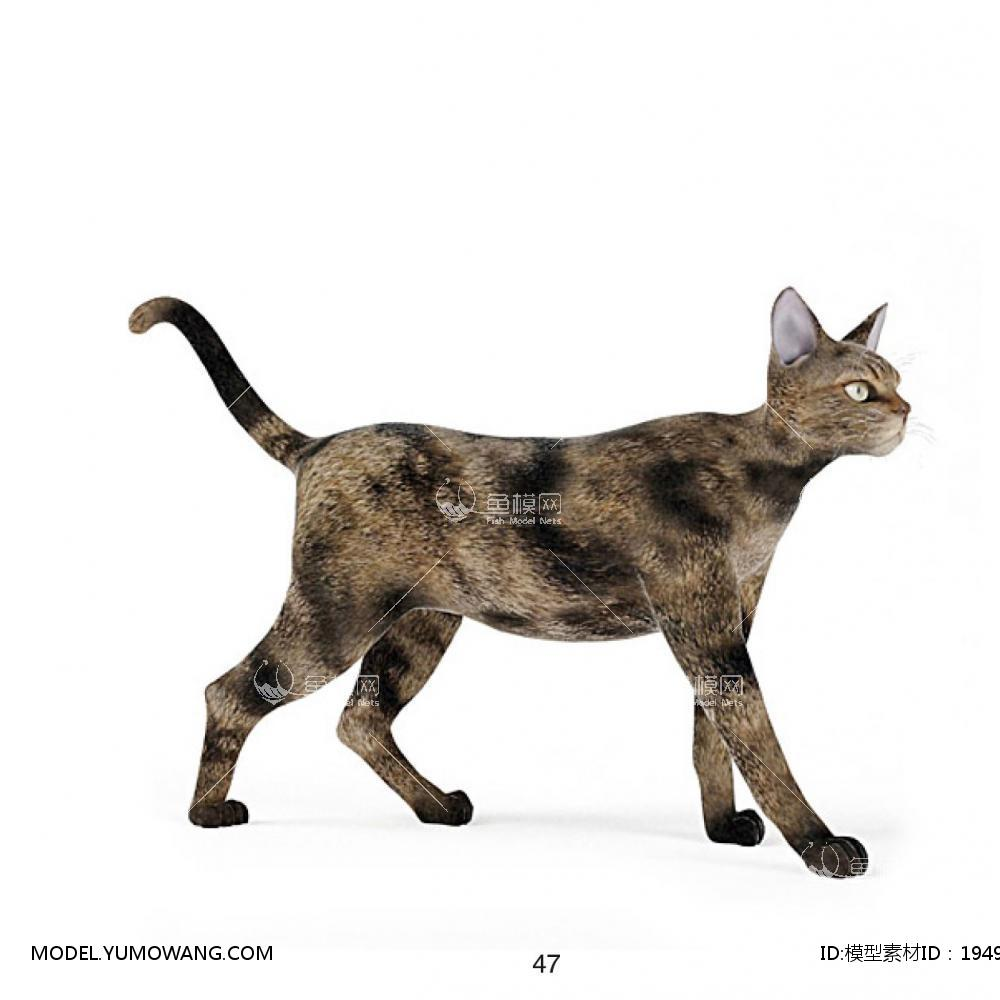 动物-猫3d模型