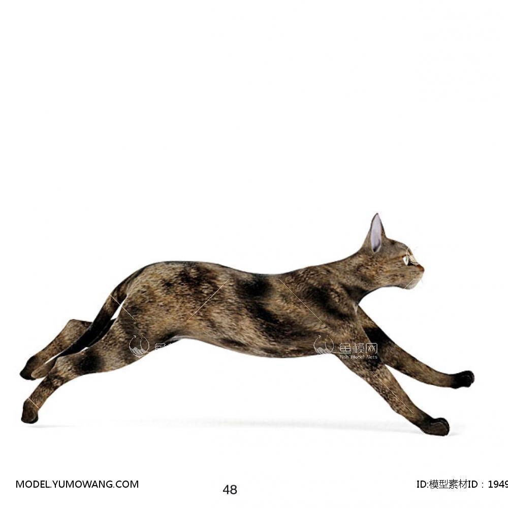 动物-猫(2)3d模型