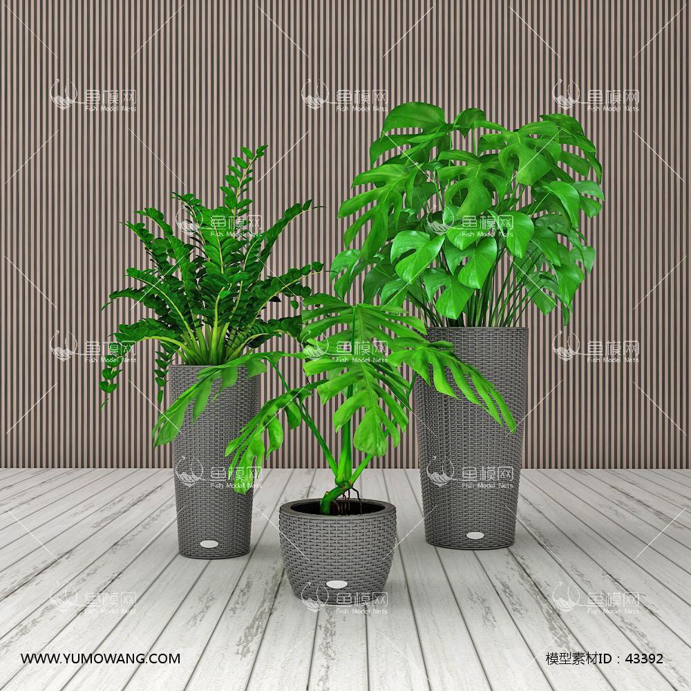 现代龟背竹盆栽组合3D模型下载-[ID]43392