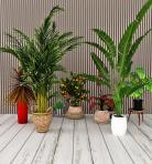 现代植物类盆栽组合3D模型下载-[ID]43426